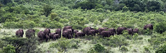songimvelo - Humala (jimlustgarten) Tags: humalasongimvelo lustgarten safari southafrica ebuhleni mpumalanga za