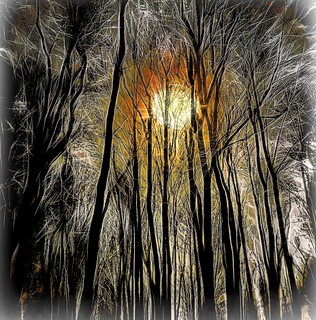 Sunrise in the Forest at Night