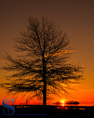 Tree Silhouette and sun rising behind Charles island (Singing With Light) Tags: 2016 2017 20th alpha6500 ct charlesisland duckpond february milford mirrorless singingwithlight a6500 beach photography singingwithlightphotography sony sunrise walnutbeach winter