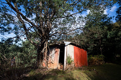 A twist in the Ending (Keith Midson) Tags: shed barn australia tasmania kaoota tramway track trail walk path building old derelict tree magical