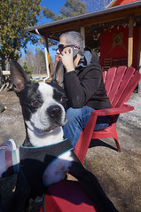 Boston wants coffee (lezumbalaberenjena) Tags: old chelsea gatineau quebec spring time springtime primavera dog perro chien chiot boston terrier bully