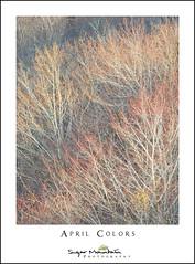April Colors (DKNC) Tags: blueridgeparkway northcarolina nc spring leaves trees red orange yellow branches daleking