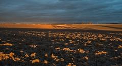 Lange Schatten bei Abendlicht (fuchs_ernst) Tags: sony abends schatten feld licht rx100 acker rottal