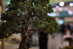 (Light Echoes) Tags: sony a6000 2017 winter march philadelphia philadelphiaflowershow philadelphiainternationalflowershow tree bonsai slrmagic 50mm cine f11