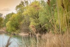 P1600975-1 (picicsoda) Tags: natura nature panasoniclumixg7 exakta 75300mm manual vintagelens countryside wildlife szelkótó lakeszelkó hungary