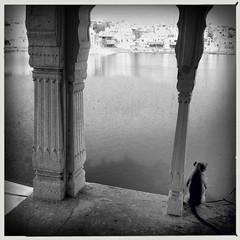 India series (Nick Kenrick..) Tags: hipstamatic lowylens aobwfilm monkey lake hindu india rajasthan pushkar