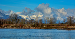 Barnston Island and Snow-Capped BC Coastal Mountains (SonjaPetersonPh♡tography) Tags: island barnston barnstonisland surrey britishcolumbia canada nikond5200 nikon afsdxnikkor18300mmf3563gedvr fraserriver channel river water waterfront waterscape katziefirstnation barnstonisland3indianreserve view scenery sky bluesky indianreserve bccoast coastalmountains bccoastalmountains snowcappedmountains clouds perimeterroad riverbank nature scenic