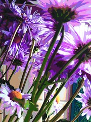 leaning daisies 2......2017-03-23 (wintersoul1) Tags: flowers daisies altered purple likeapainting angles