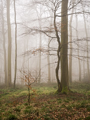 Protection (Damian_Ward) Tags: ©damianward damianward oxfordshire trees chilterns chilternhills thechilterns fog mist