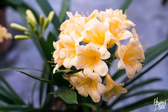 Philadelphia Flower Show (Hershock Digital) Tags: flowers flower show philly philadelphia phs phila center hershock digital colors a7rii a7r sony 50mm