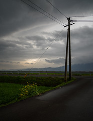King and child. (Yasuyuki Oomagari) Tags: pole rape sunset rural country countryside evening nikon zeiss distagont2821 flower mountain yellow green cloud clouds