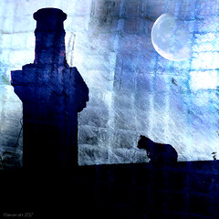 My world turned inky blue (Lemon~art) Tags: cat roof chimney moon blue texture manipulation dark inkyblue silhouette