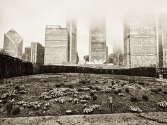 Twinkle (ancientlives) Tags: chicago illinois usa travel luriegarden garden millenniumpark downtown towers buildings architecture skyline skyscrapers cloud mist weather flowers mono monochrome thursday april 2017 spring walking streetphotography street