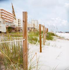 By The Shore, Alabama (marysmyth(NOLA13) ️) Tags: 503cxi alabama beach endangered fence film hasselblad kodakektar100 mediumformat protected ropes sand seaoats summer vacation gulfshores