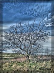 freedom :) (dariusz_lipinski) Tags: tree sky clouds grass landscape beautyinnature freedom enjoy spring poland lowersilesia