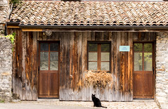Sitting cat (gregory.sevin) Tags: cat black animal yvoire france