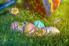 Happy Easter! (danielledufour430) Tags: easter eastersunday holiday festive colorful pastel eggs eastereggs basket depthoffield celebrate sony6000 grass outside