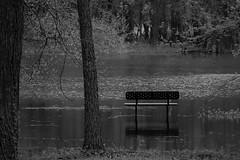 high water (David Sebben) Tags: high water flood mississippi river credit island park bench