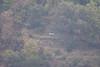 arnie nel bosco (explored) (Carla@) Tags: liguria italia europa apicoltura mfcc canon