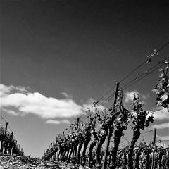 Vignes (Dreams of travel) Tags: landscape nature vigne vignes paysage blackwhite noirblanc sky ciel