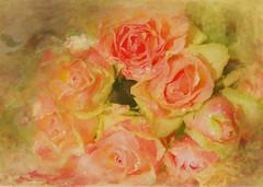Beautiful Roses (BirgittaSjostedt) Tags: magicunicornverybest rose flower nature texture paint renoir inspire art unique closeup ie birgittasjostedt