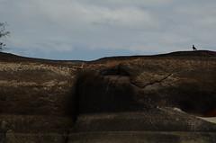 Caracara on the rock (Aztlek) Tags: caracara roca rock orinocoriver paisaje ríoorinoco orinoco fotoexpedición fotoexpediciónorinoco vichada colombia photoexpedition orinocophotoexpedition trekking hiking senderismo caminata viajaryvivir afsdxnikkor18200mmf3556ged nikkor 18200mmf3556 f3556 f13556 ufraw ilovenature nikond7000 nikon d7000 nikongpsunit gpsunitgp1 gpsunit photography fotografía