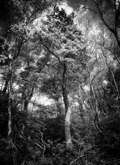 magic tree (rael11ld) Tags: elements