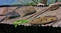 NEPAL, Auf dem Weg nach Pokhara, Essen auf dem Dach, 16023/8284 (roba66) Tags: essen nahrung dach roof reisen travel explore voyages roba66 visit urlaub nepal asien asia südasien pokhara