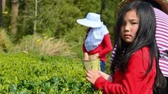 Enkelkinder schauen schon mal zu (cha.shifu) Tags: tee xiang direkt kaufen getränk günstig entspannung erfrischung gesund spezialität getraenk grüntee gruentee chashifu