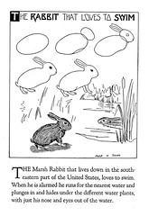 Marsh Rabbit (katinthecupboard) Tags: artdeco tutorial 1923 howtodraw drawingtutorial cobbxshinn