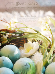 Nesting Time (mintukka) Tags: blue light stilllife green texture easter spring nest egg decoration feather textures eggs