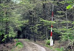 _laubbaum, nadelbaum, schlagbaum...;-) (SpitMcGee) Tags: wald absperrung waldweg nadelbaum laubbaum schlagbaum spitmcgee