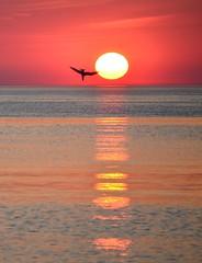 Farewell to my island (Tobi_2008) Tags: sunset sky sun bird germany island deutschland evening abend sonnenuntergang seagull himmel insel möwe sylt sonne nordsee allemagne germania vogel diamondclassphotographer flickrdiamond