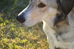 Summer (Trishie17) Tags: dog sunlight mutt husky