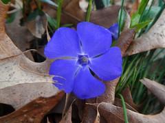 Boot Lake Nature Preserve (tquist24) Tags: flower macro geotagged spring indiana elkhart bootlakenaturepreserve nikoncoolpixaw100