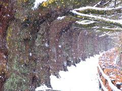 Zrich, Shilhlzlistrasse 03.2007 (Swiss.piton (B H & S C)) Tags: snow cold tree outside photography schweiz switzerland niceshot suisse zurich zrich svizzera baum ilike flickrphotographer beautifulshot shotforfun justmeandmycamera svislando clickcamera schneewinter theworldthroughphotography ibringmycameraeverywhere swissbeauty svisa swissamateurphotographers swisspiton ilovephotografie schweizerphotographen
