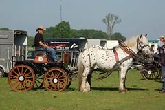 DSC_7920 (Ton van der Weerden) Tags: horses horse dutch de cheval belgian nederlands belges draft chevaux 2014 budel belgisch trait trekpaard trekpaarden smokkelrally smokkelrallybudel2014