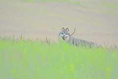 """Zarro Through The Grass • <a style=""""font-size:0.8em;"""" href=""""http://www.flickr.com/photos/96196263@N07/14247005773/"""" target=""""_blank"""">View on Flickr</a>"""