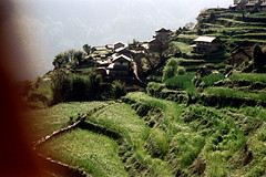 21-433 (ndpa / s. lundeen, archivist) Tags: nepal houses house mountain mountains color building film wall rural 35mm buildings village 21 farm nick hill terraces hills fields stonewall mountainside nepalese 1970s hillside 1972 himalayas nepali dewolf terraced mountainvillage ruralvillage terracefarming nickdewolf photographbynickdewolf terracedhillside ruralnepal terracedfarmland reel21 hillyregion terracedmountainside