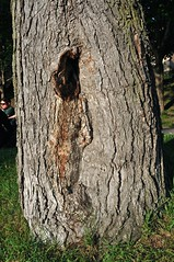 (Pierre thier) Tags: treesubject artfiguratif d300s nikond3oos