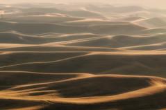 The rolling hills of the Palouse (NikonDigifan) Tags: sunset haze hills tamron goldenhour palouse easternwashington palousehills steptoebutte colorefexpro niksoftware nikond300 tamronlenses tamron7020028 mikegassphotography