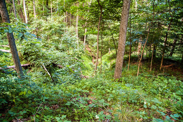 Hitz-Rhodehamel Nature Woods - July 24, 2014