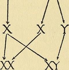 Anglų lietuvių žodynas. Žodis gene linkage reiškia genų sąsaja lietuviškai.