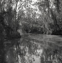 20140707 Calamvale Creek Park - B&W-6 (Degilbo on flickr) Tags: hasselblad501c scannednegatives carlzeissplanar2880 kodak400tmy2 epsonscannerv500 lomographydigitaliza120mmscanningmask calamvalecreekpark kodakd7695mins11 lightroom55