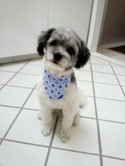 Jackson's new scarf