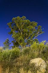 Into the night (fs.photovideo) Tags: sky tree rock night stars long exposure estrelas cu noite rvore exposio rocha longa
