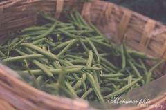 Farmer's Market (Metamorphic Photos) Tags: food green vegetables beans healthy farmers market small business