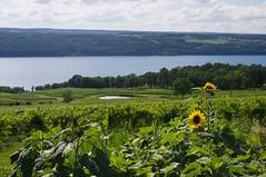 IMGP2631.jpg (Bill McBride) Tags: water vineyard winery newyorkstate fingerlakes senecalake