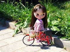 Stroll on the bicycle