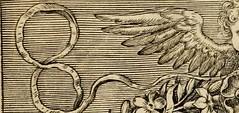 """Image from page 339 of """"Paradisus sponsi et sponsae in quo messis myrrhae et aromatum ex instrumentis ac mysterijs passionis Christi colligenda, vt ei commoriamur : et, Pancarpium Marianum, septemplici titulorum serie distinctum, vt in B. Virginis odorem"""